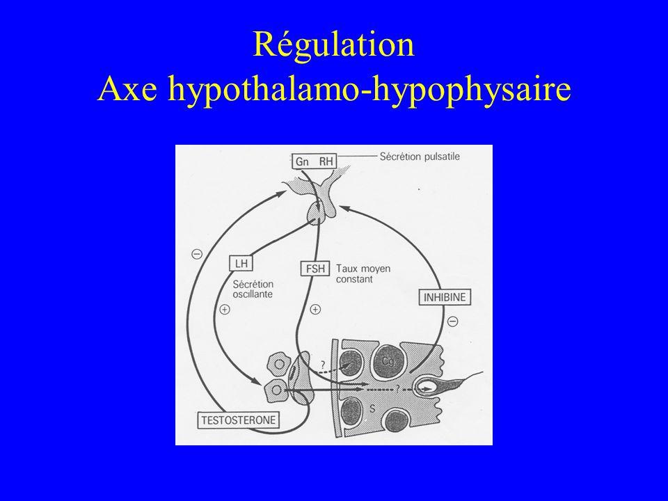 Régulation Axe hypothalamo-hypophysaire