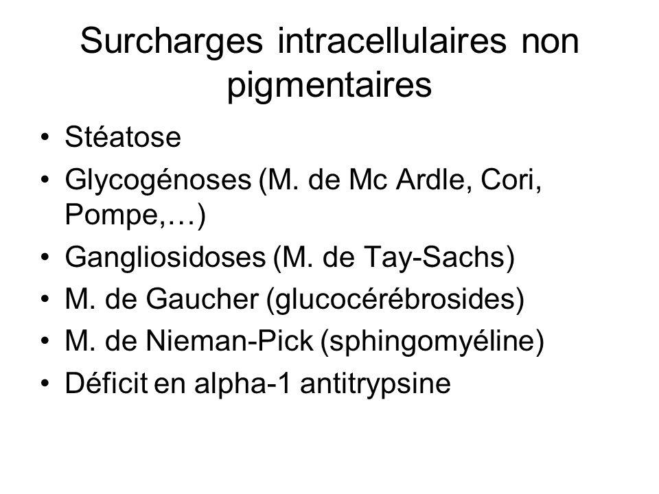 Surcharges intracellulaires non pigmentaires Stéatose Glycogénoses (M. de Mc Ardle, Cori, Pompe,…) Gangliosidoses (M. de Tay-Sachs) M. de Gaucher (glu