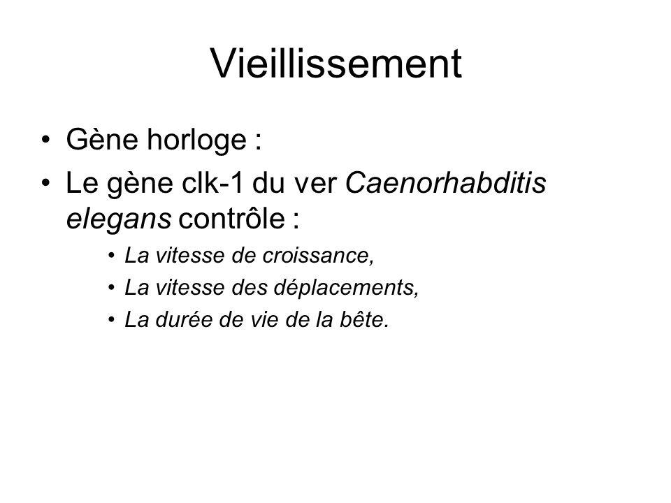 Vieillissement Gène horloge : Le gène clk-1 du ver Caenorhabditis elegans contrôle : La vitesse de croissance, La vitesse des déplacements, La durée d