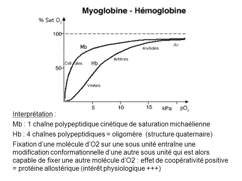 Interprétation : Mb : 1 chaîne polypeptidique cinétique de saturation michaélienne Hb : 4 chaînes polypeptidiques = oligomère (structure quaternaire)