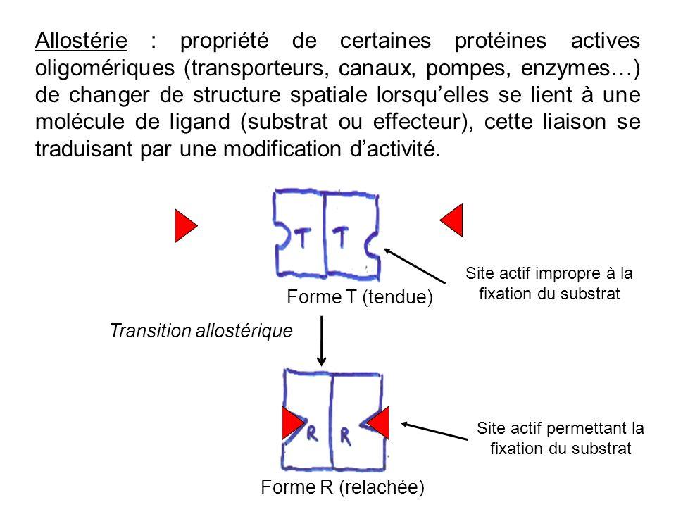 Allostérie : propriété de certaines protéines actives oligomériques (transporteurs, canaux, pompes, enzymes…) de changer de structure spatiale lorsque