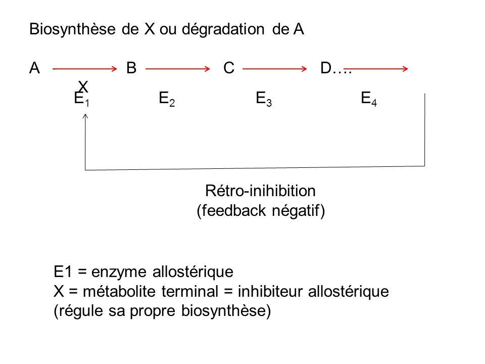 Biosynthèse de X ou dégradation de A ABCD…. X E1E1 E2E2 E3E3 E4E4 Rétro-inihibition (feedback négatif) E1 = enzyme allostérique X = métabolite termina