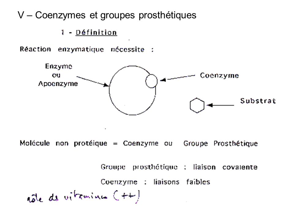 V – Coenzymes et groupes prosthétiques