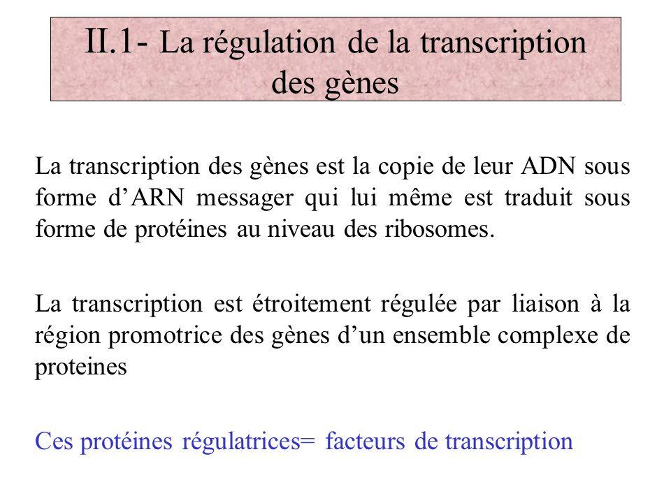 II.1- La régulation de la transcription des gènes La transcription des gènes est la copie de leur ADN sous forme dARN messager qui lui même est tradui