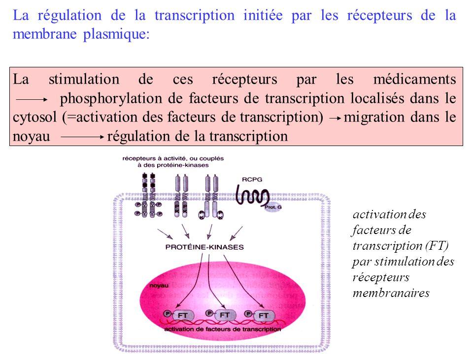La régulation de la transcription initiée par les récepteurs de la membrane plasmique: La stimulation de ces récepteurs par les médicaments phosphoryl