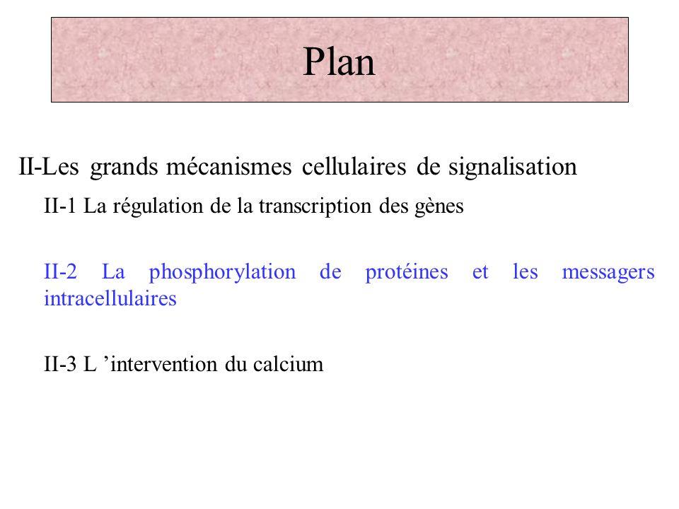 Plan II-Les grands mécanismes cellulaires de signalisation II-1 La régulation de la transcription des gènes II-2 La phosphorylation de protéines et le