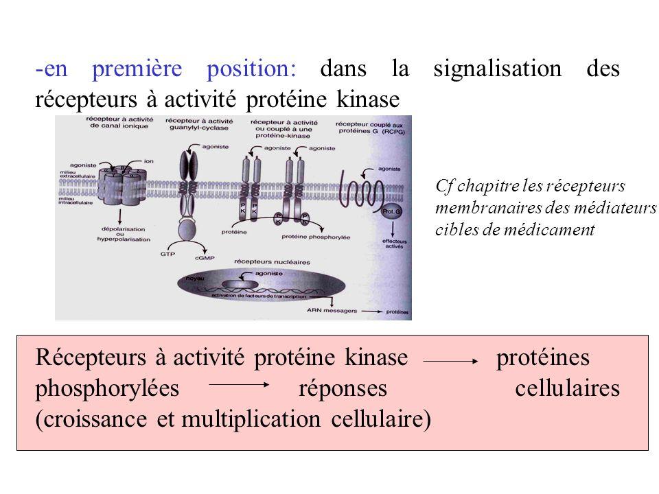 -en première position: dans la signalisation des récepteurs à activité protéine kinase Récepteurs à activité protéine kinaseprotéines phosphoryléesrép