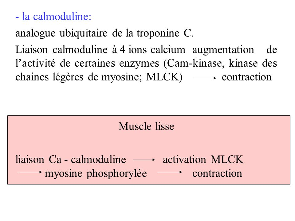 - la calmoduline: analogue ubiquitaire de la troponine C. Liaison calmoduline à 4 ions calciumaugmentation de lactivité de certaines enzymes (Cam-kina