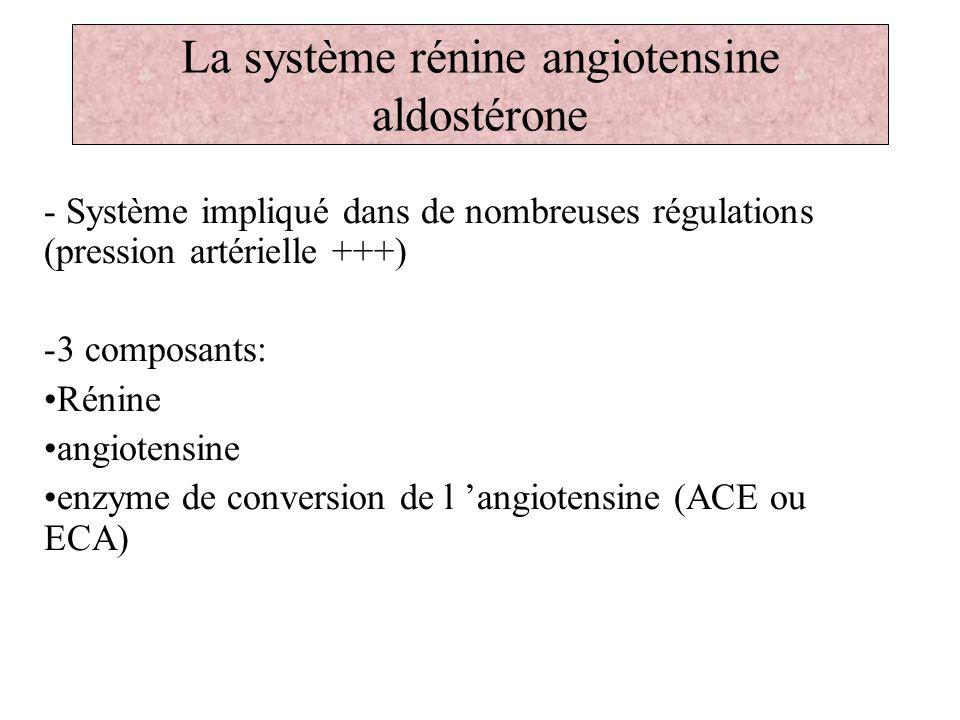 La système rénine angiotensine aldostérone - Système impliqué dans de nombreuses régulations (pression artérielle +++) -3 composants: Rénine angiotens