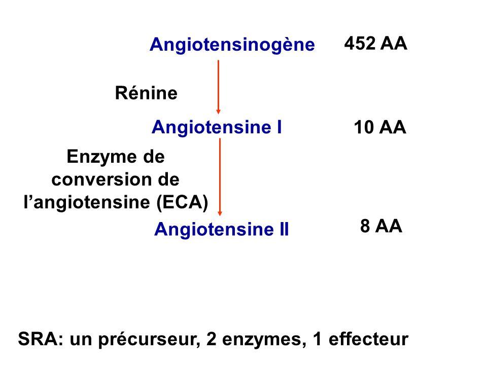 Angiotensinogène Angiotensine I Angiotensine II Rénine Enzyme de conversion de langiotensine (ECA) 452 AA 10 AA 8 AA SRA: un précurseur, 2 enzymes, 1