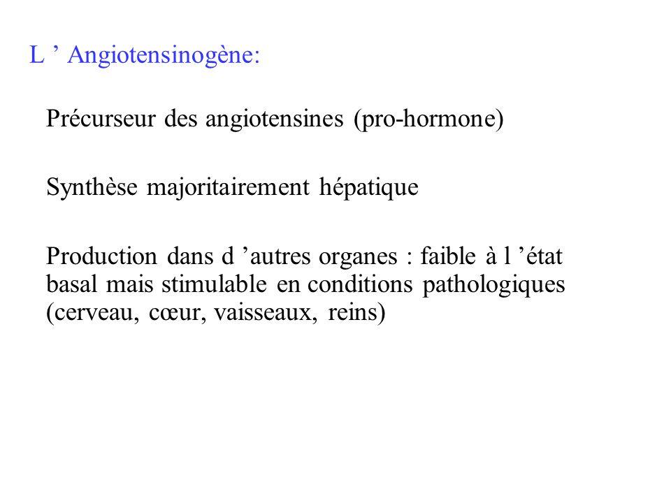L Angiotensinogène: Précurseur des angiotensines (pro-hormone) Synthèse majoritairement hépatique Production dans d autres organes : faible à l état b