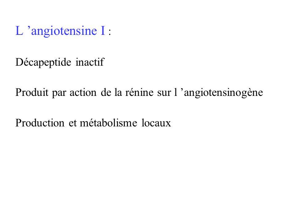 L angiotensine I : Décapeptide inactif Produit par action de la rénine sur l angiotensinogène Production et métabolisme locaux