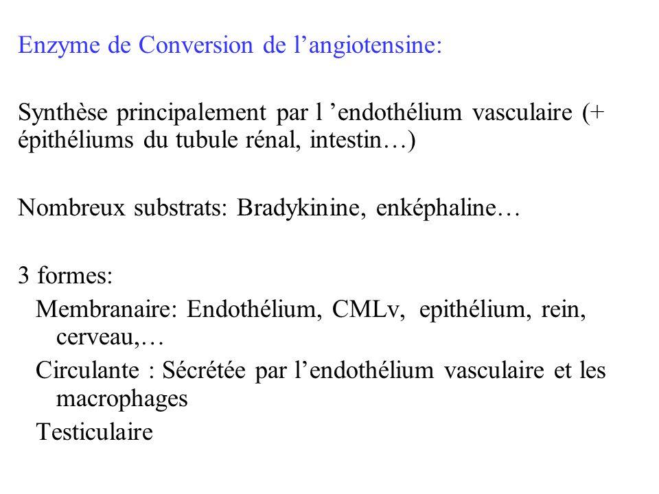 Enzyme de Conversion de langiotensine: Synthèse principalement par l endothélium vasculaire (+ épithéliums du tubule rénal, intestin…) Nombreux substr
