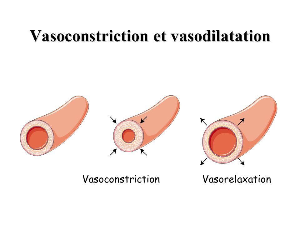Vasoconstriction et vasodilatation VasoconstrictionVasorelaxation