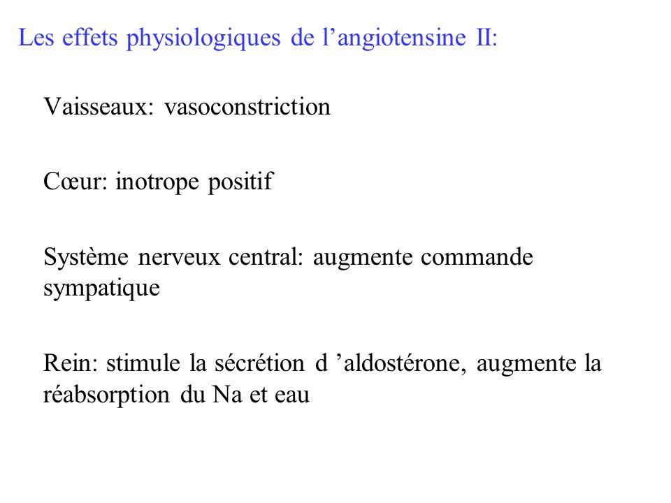 Les effets physiologiques de langiotensine II: Vaisseaux: vasoconstriction Cœur: inotrope positif Système nerveux central: augmente commande sympatiqu