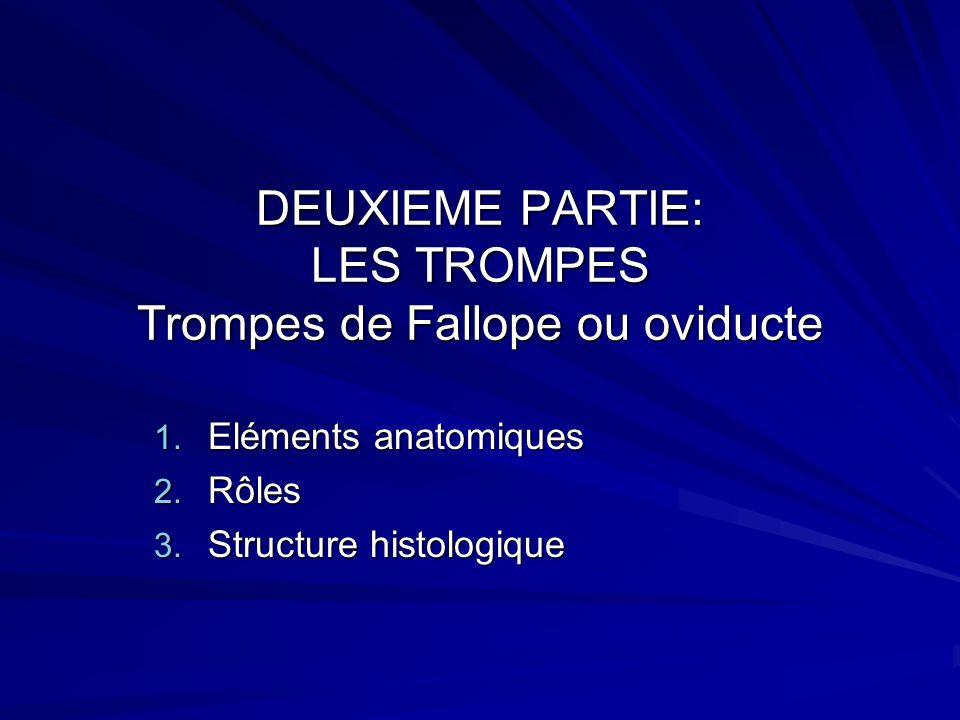 Schéma des 4 segments de la trompe