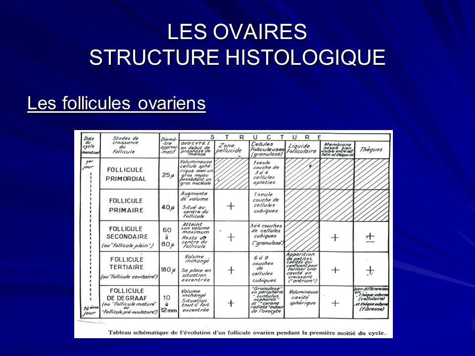 Structure histologique de lovaire