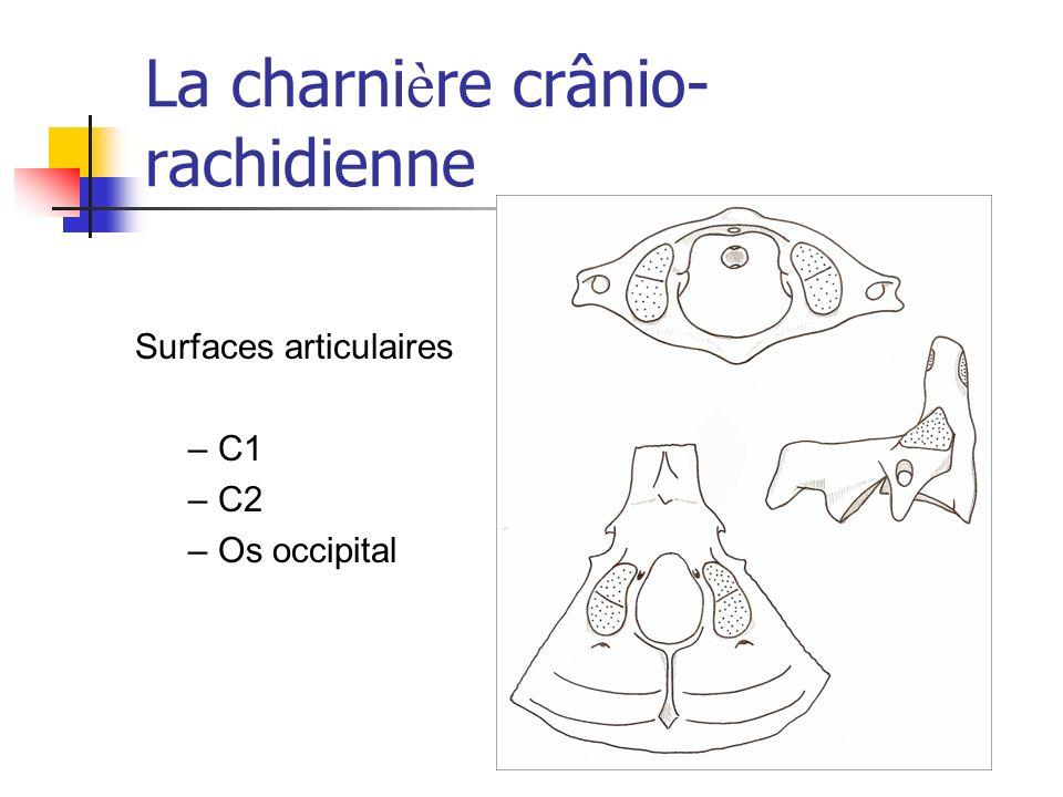 La charni è re crânio- rachidienne Surfaces articulaires – C1 – C2 – Os occipital