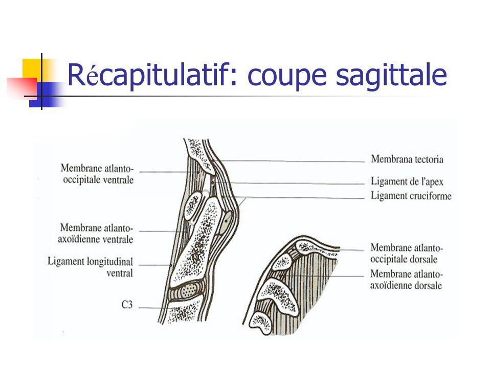 R é capitulatif: coupe sagittale