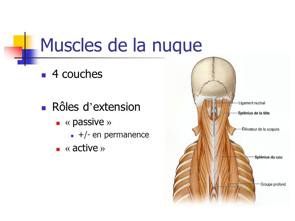 Muscles de la nuque 4 couches Rôles d extension « passive » +/- en permanence « active »