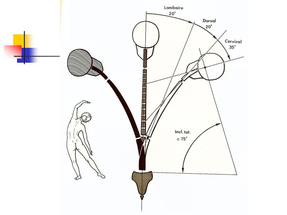 Vue post é rieure (1) 1.cap AO 2.cap AAL 3.cap art C2-C3 6.LLP 7.Mb tectoriale