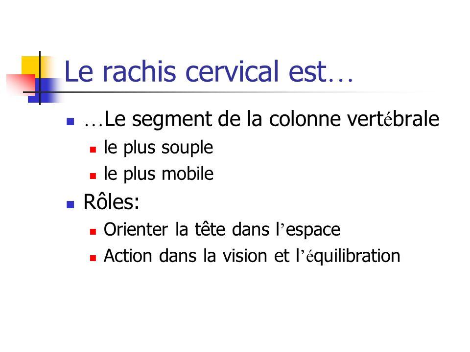 Le rachis cervical est … … Le segment de la colonne vert é brale le plus souple le plus mobile Rôles: Orienter la tête dans l espace Action dans la vision et l é quilibration