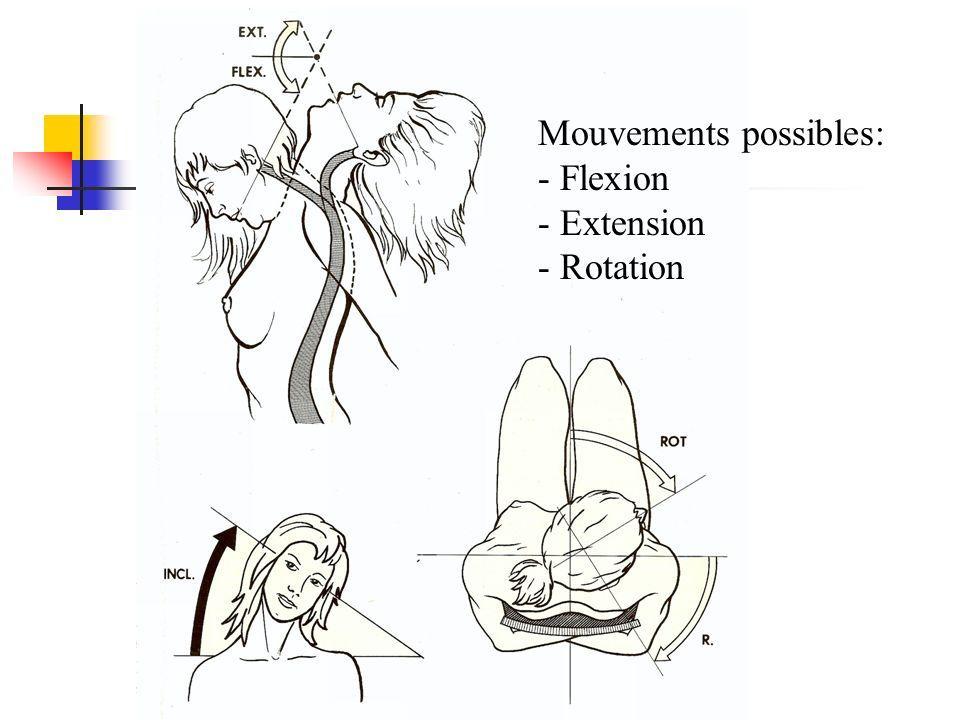 Mouvements possibles: - Flexion - Extension - Rotation