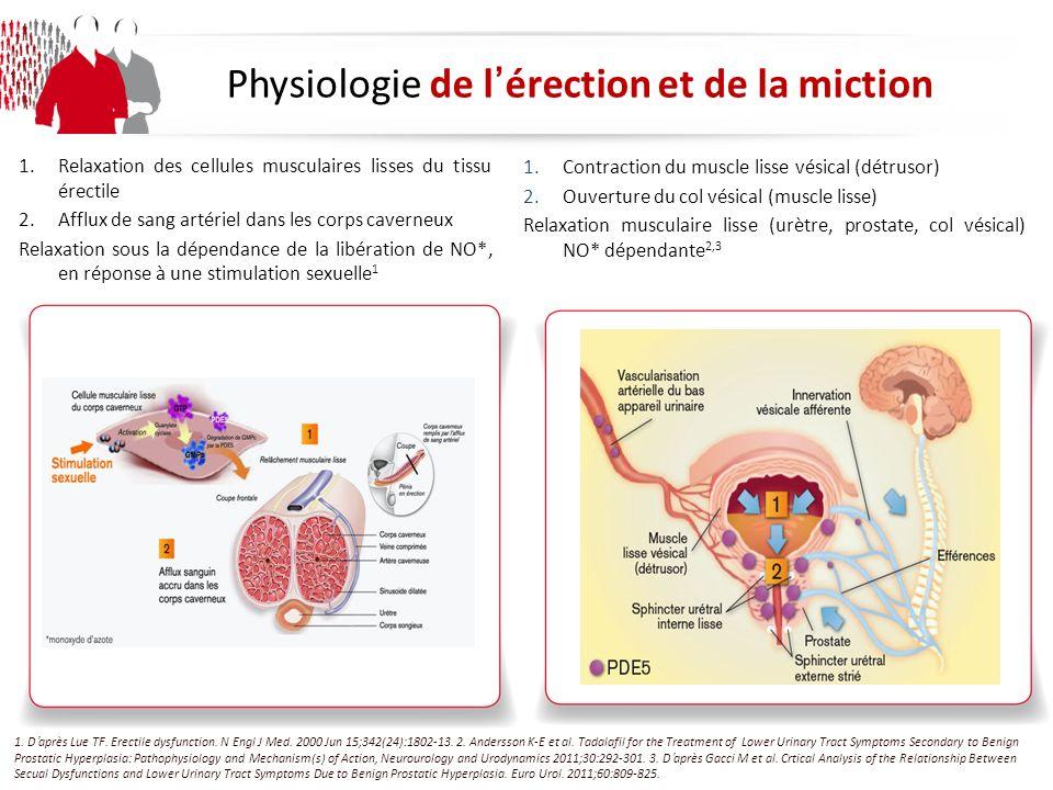 Physiologie de lérection et de la miction 1.Contraction du muscle lisse vésical (détrusor) 2.Ouverture du col vésical (muscle lisse) Relaxation musculaire lisse (urètre, prostate, col vésical) NO* dépendante 2,3 1.Relaxation des cellules musculaires lisses du tissu érectile 2.Afflux de sang artériel dans les corps caverneux Relaxation sous la dépendance de la libération de NO*, en réponse à une stimulation sexuelle 1 1.