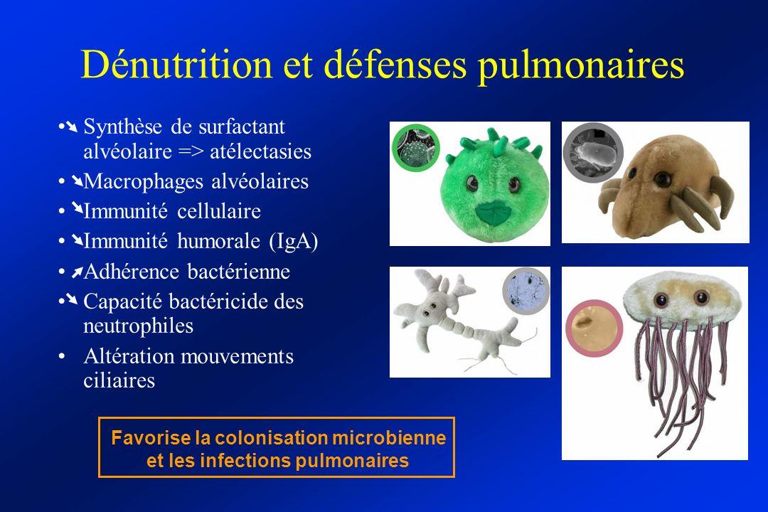 Dénutrition et défenses pulmonaires Synthèse de surfactant alvéolaire => atélectasies Macrophages alvéolaires Immunité cellulaire Immunité humorale (I