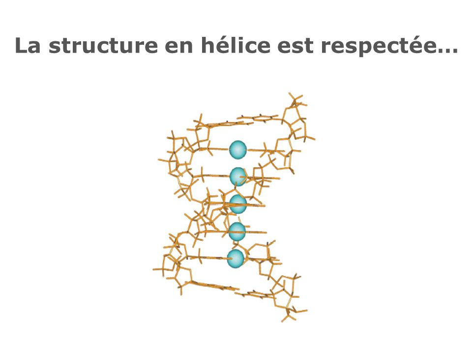 La structure en hélice est respectée…