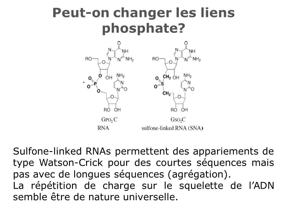 Peut-on changer les liens phosphate? Sulfone-linked RNAs permettent des appariements de type Watson-Crick pour des courtes séquences mais pas avec de