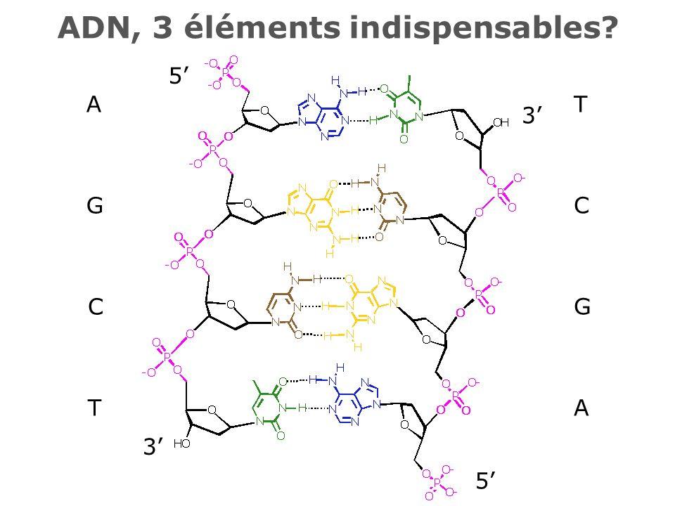 3 5 5 3 T C G A A G C T ADN, 3 éléments indispensables?