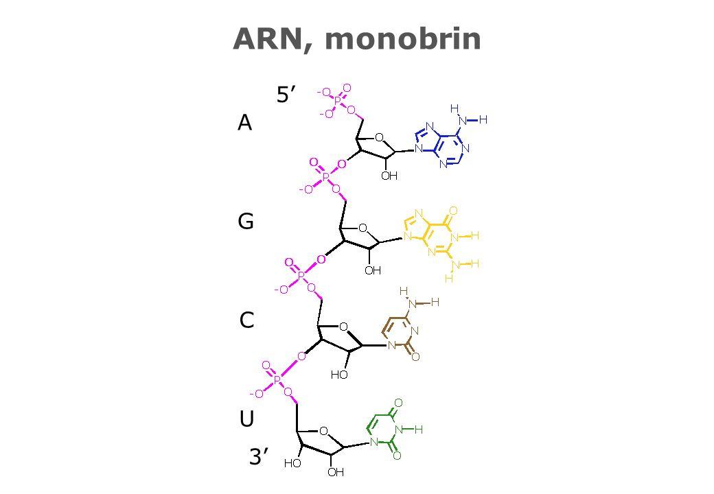 3 5 U C G A ARN, monobrin