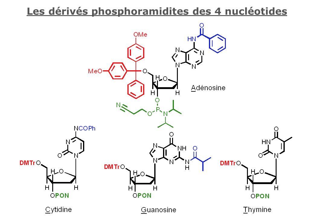 Les dérivés phosphoramidites des 4 nucléotides