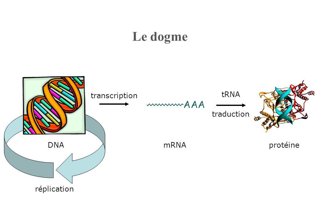 Le dogme mRNA tRNA traduction protéine transcription DNA réplication