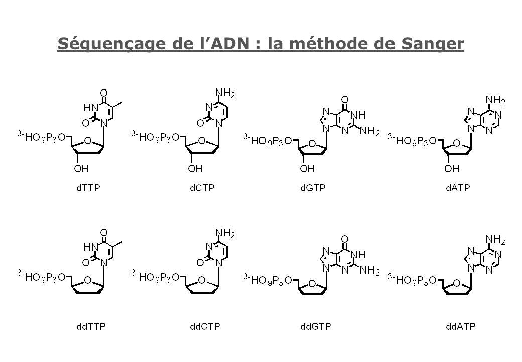 Séquençage de lADN : la méthode de Sanger