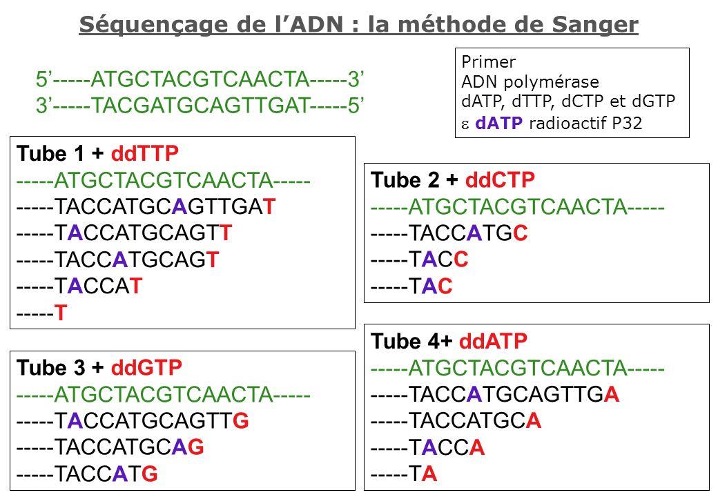 Tube 4+ ddATP -----ATGCTACGTCAACTA----- -----TACCATGCAGTTGA -----TACCATGCA -----TACCA -----TA Tube 1 + ddTTP -----ATGCTACGTCAACTA----- -----TACCATGCAG