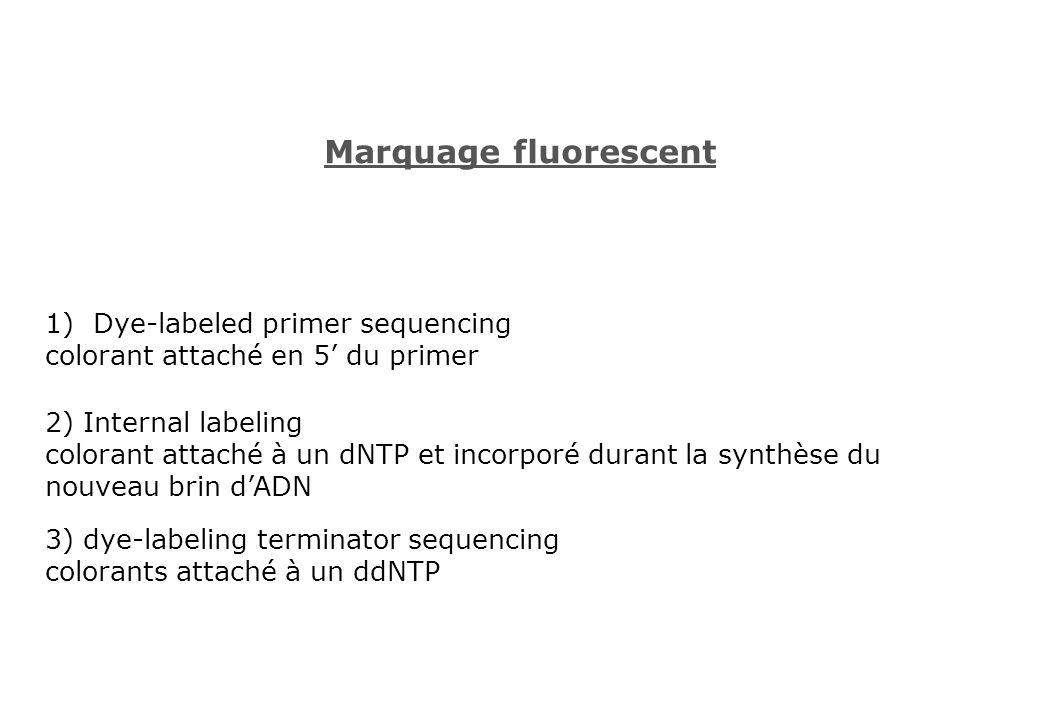Marquage fluorescent 1)Dye-labeled primer sequencing colorant attaché en 5 du primer 2) Internal labeling colorant attaché à un dNTP et incorporé dura