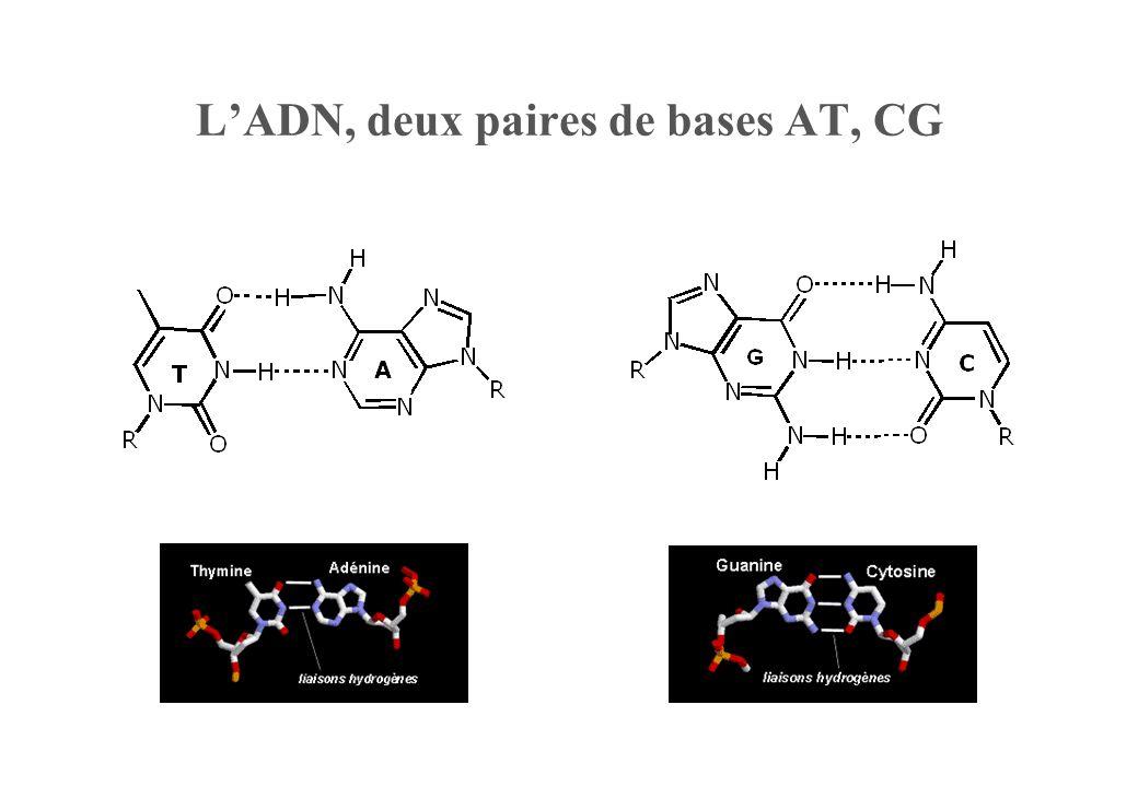 Fluorescence (Diagramme de Jablonski ) S0S0 S 1 S1S1 Energie h h FAM max = 490-495 nm Em max = 515-520 nm