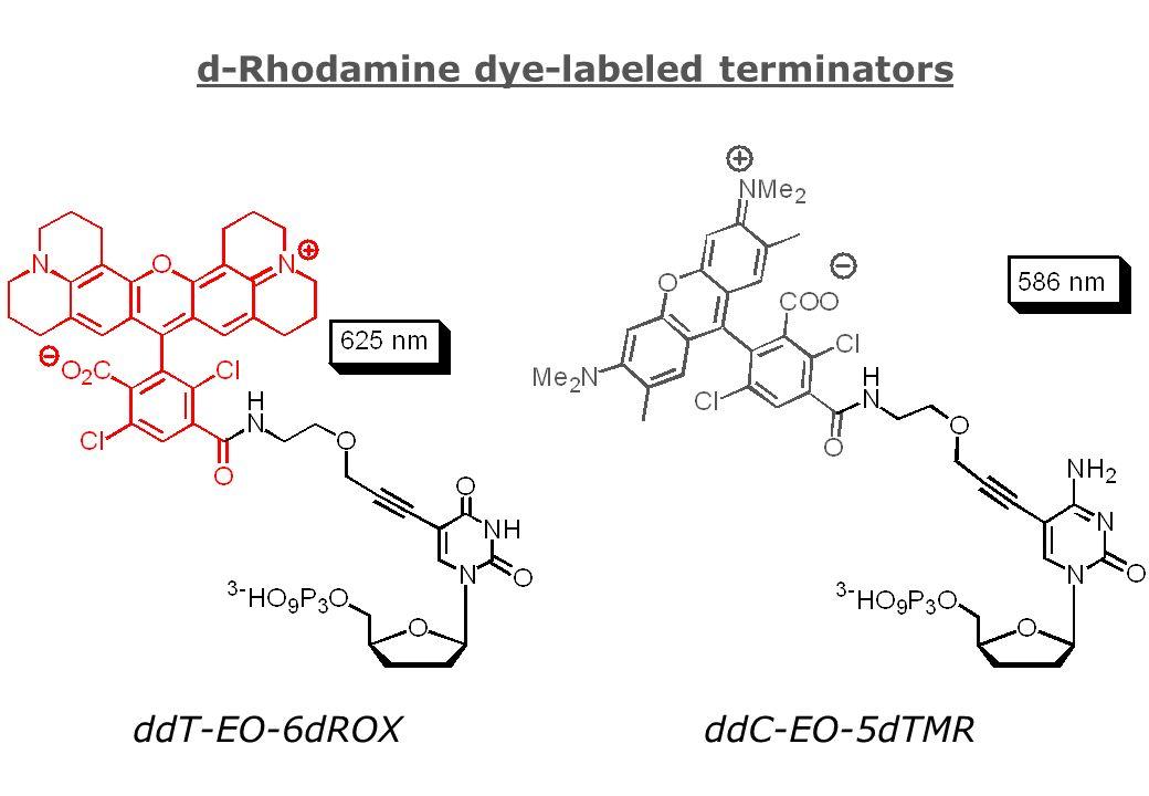 d-Rhodamine dye-labeled terminators ddC-EO-5dTMRddT-EO-6dROX