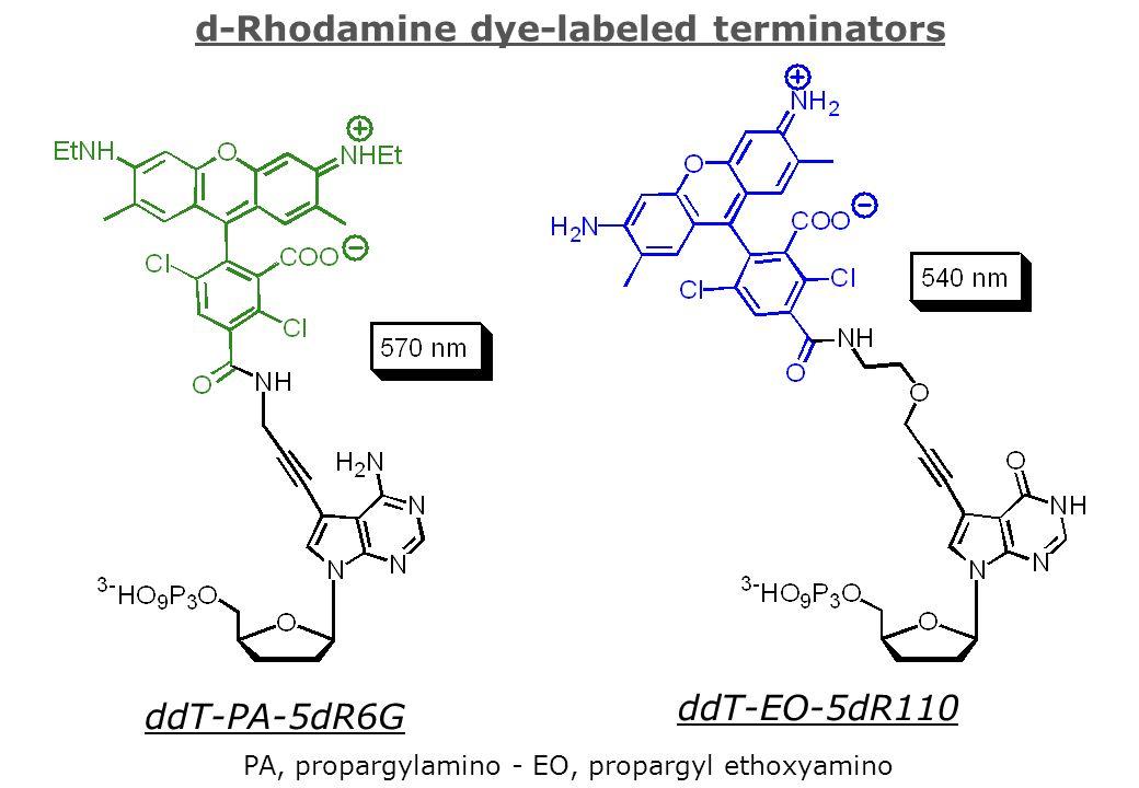 d-Rhodamine dye-labeled terminators ddT-PA-5dR6G ddT-EO-5dR110 PA, propargylamino - EO, propargyl ethoxyamino