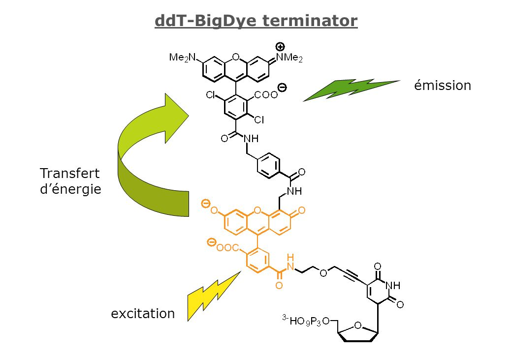 ddT-BigDye terminator excitation émission Transfert dénergie