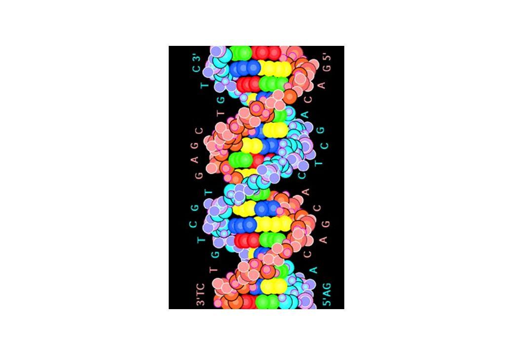 I.2. Séquençage de lADN