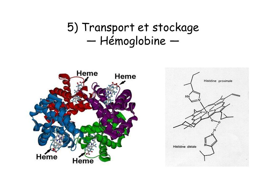 5) Transport et stockage Hémoglobine