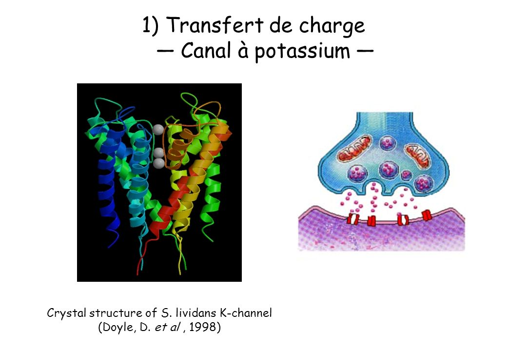 1)Transfert de charge Canal à potassium Crystal structure of S. lividans K-channel (Doyle, D. et al, 1998)