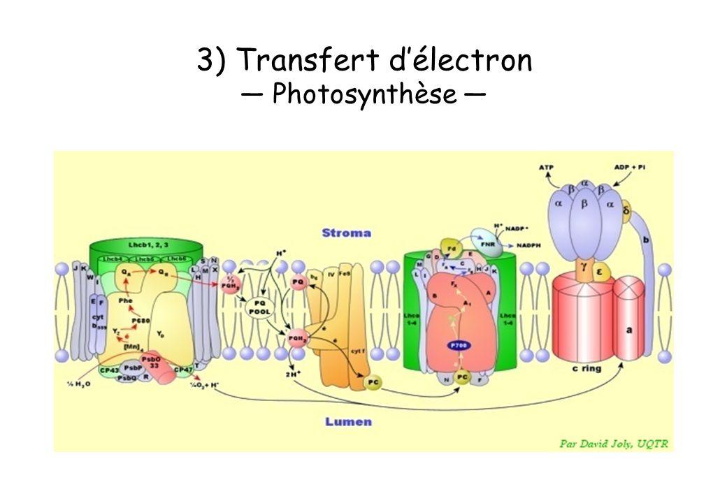 3) Transfert délectron Photosynthèse