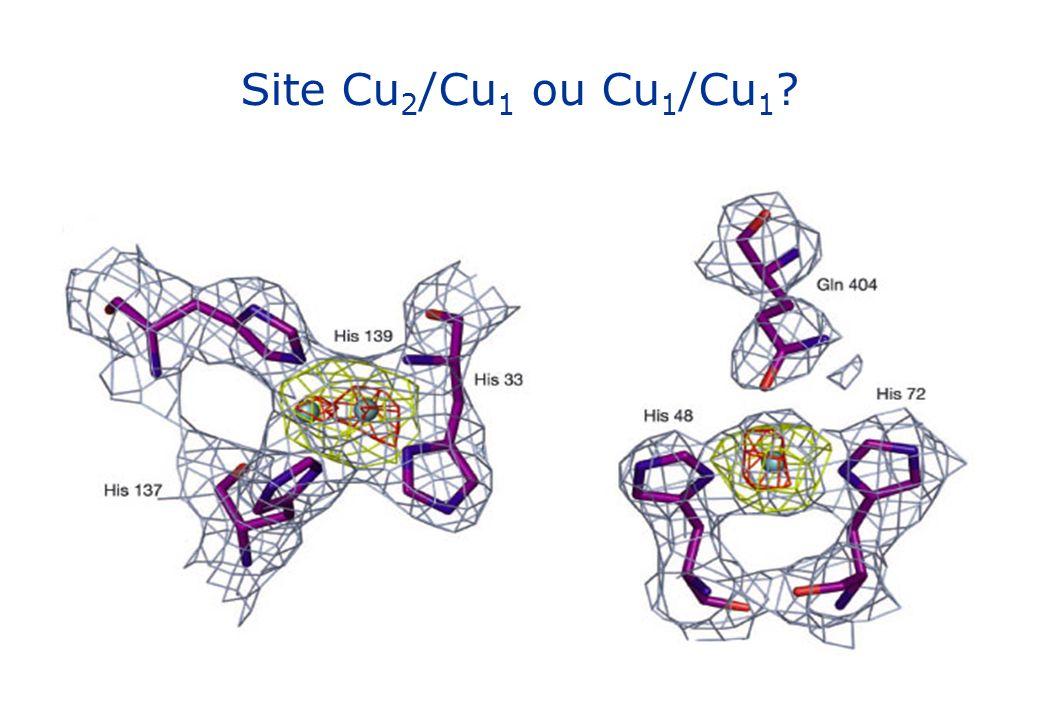 Site Cu 2 /Cu 1 ou Cu 1 /Cu 1 ?