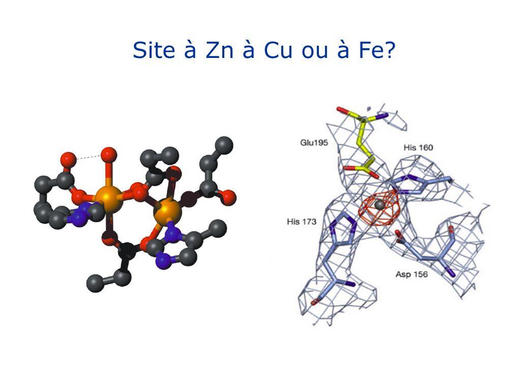 Site à Zn à Cu ou à Fe?