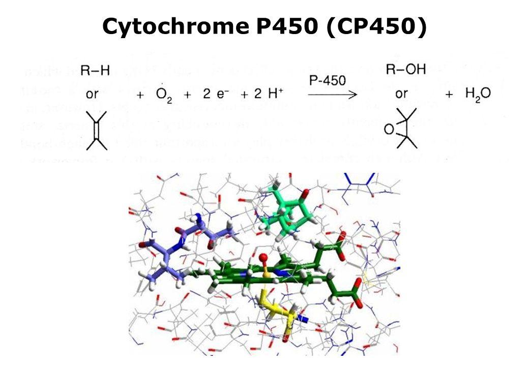 Cytochrome P450 (CP450)