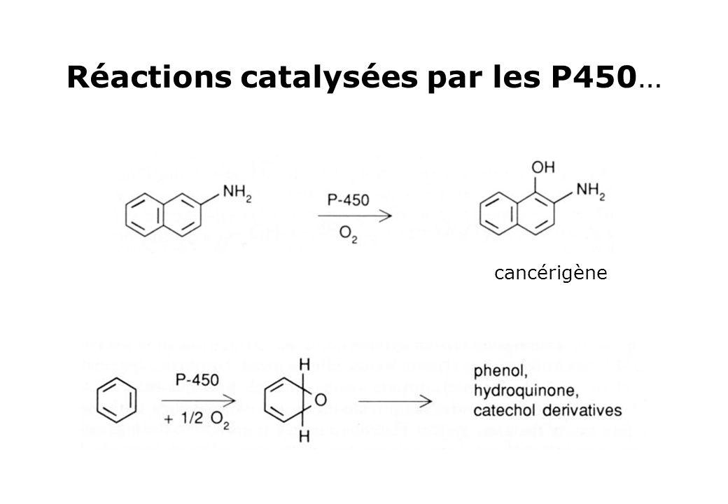 Réactions catalysées par les P450… cancérigène